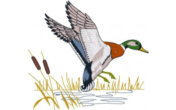 673-White - Duck head panel